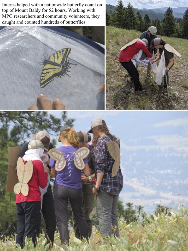 Interns helped with a nationwide butterfly count on top of Mount Baldy for 52 hours