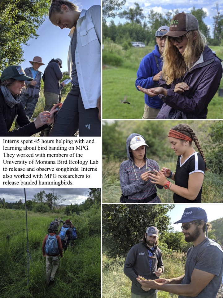 Interns spent 45 hours helping with and learning about bird banding on MPG.