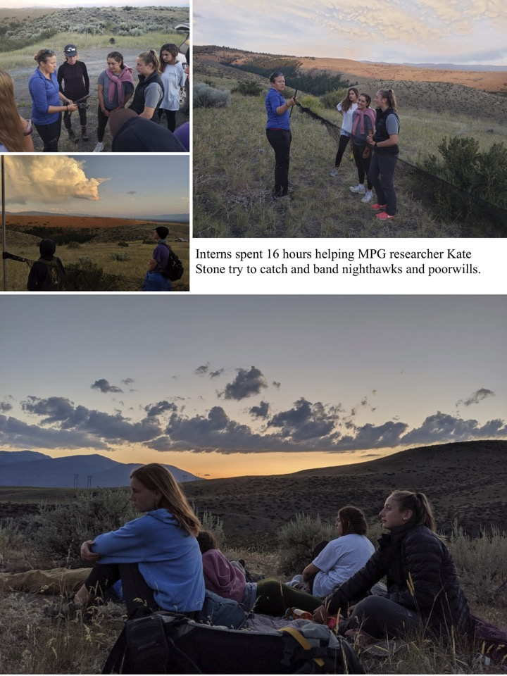 Interns spent 16 hours helping MPG researcher Kate Stone try to catch and band nighthawks and poorwills.