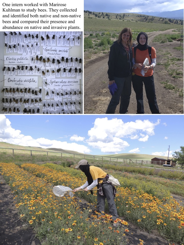 One intern worked with Marirose Kuhlman to study bees.