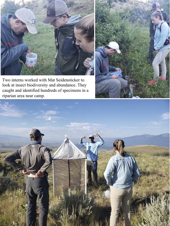Two interns worked with Mat Seidensticker to look at insect biodiversity and abundance.