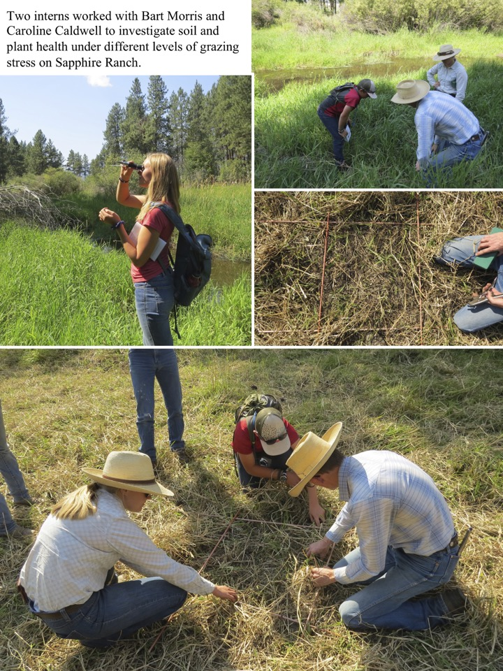 Two interns worked with Bart Morris and Caroline Caldwell to investigate soil and plant health under different levels of grazing stress on Sapphire Ranch.