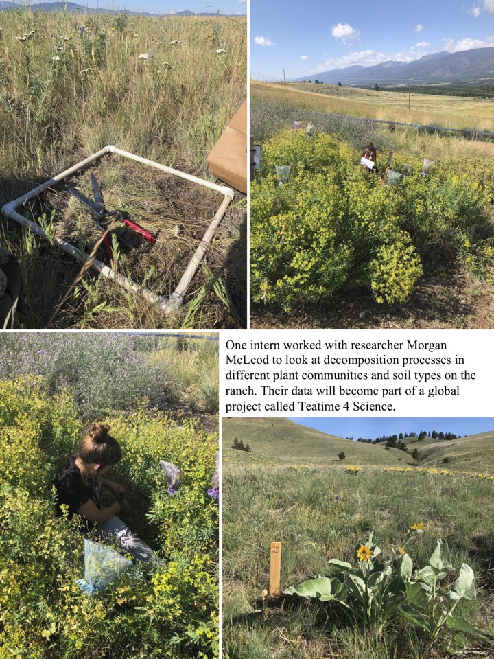 One intern worked with researcher Morgan McLeod to look at decomposition processes in different plant communities and soil types on the ranch.