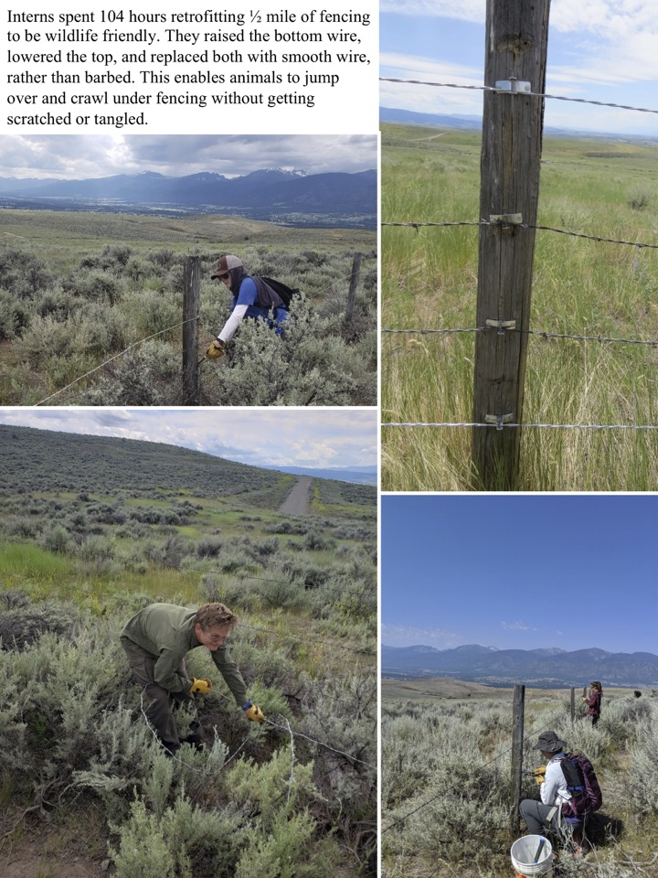 Interns spent 104 hours retrofitting 1⁄2 mile of fencing to be wildlife friendly.