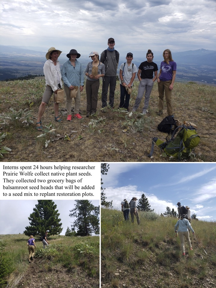 Interns spent 24 hours helping researcher Prairie Wolfe collect native plant seeds.