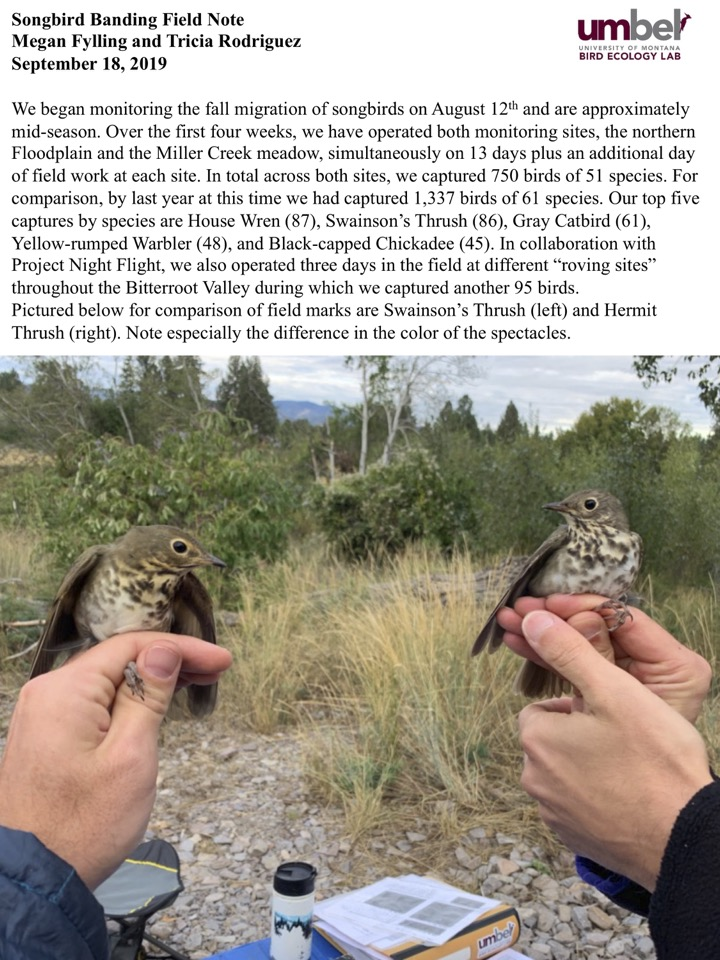 We began monitoring the fall migration of songbirds on August 12th and are approximately mid-season.