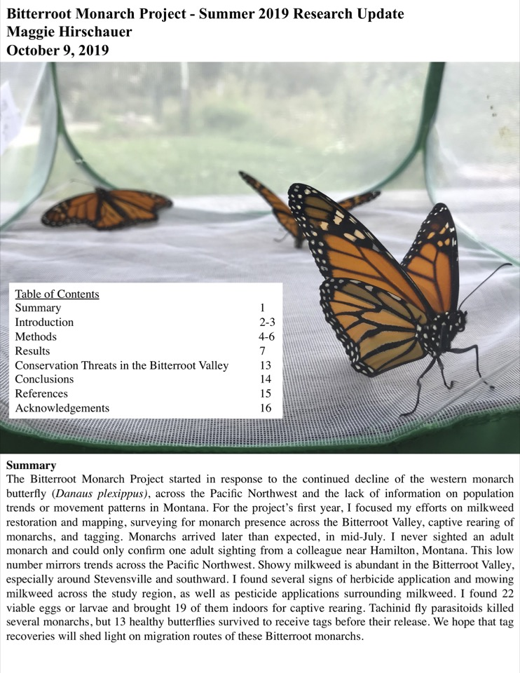 The Bitterroot Monarch Project started in response to the continued decline of the western monarch butterfly