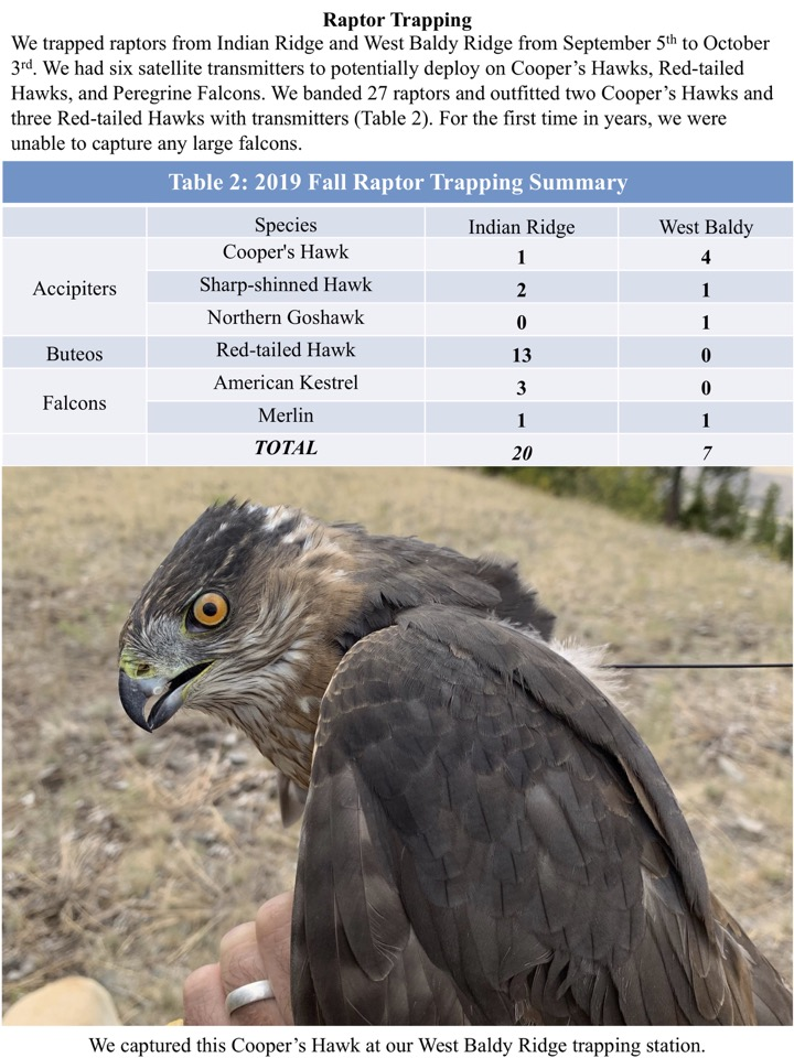 We had six satellite transmitters to potentially deploy on Cooper's Hawks, Red-tailed Hawks, and Peregrine Falcons.