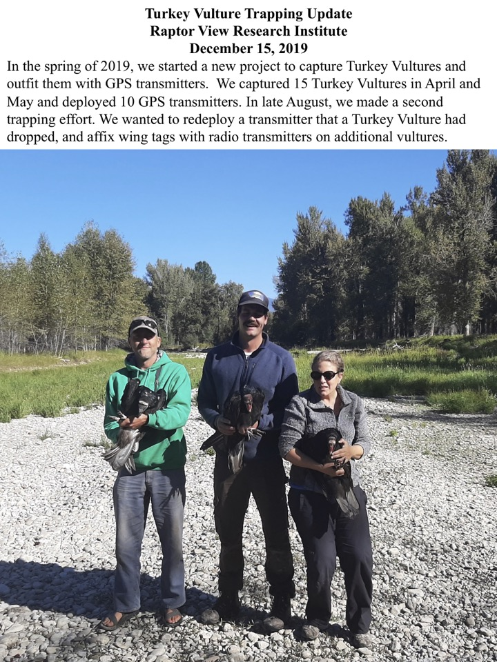 In the spring of 2019, we started a new project to capture Turkey Vultures and outfit them with GPS transmitters.