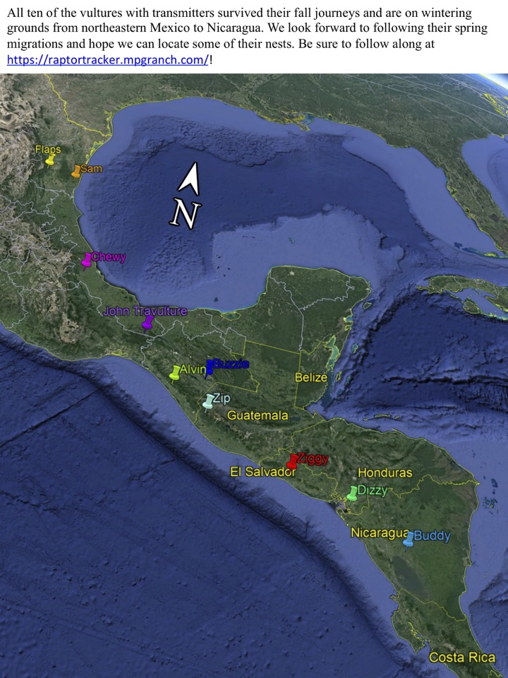 All ten of the vultures with transmitters survived their fall journeys and are on wintering grounds from northeastern Mexico to Nicaragua.