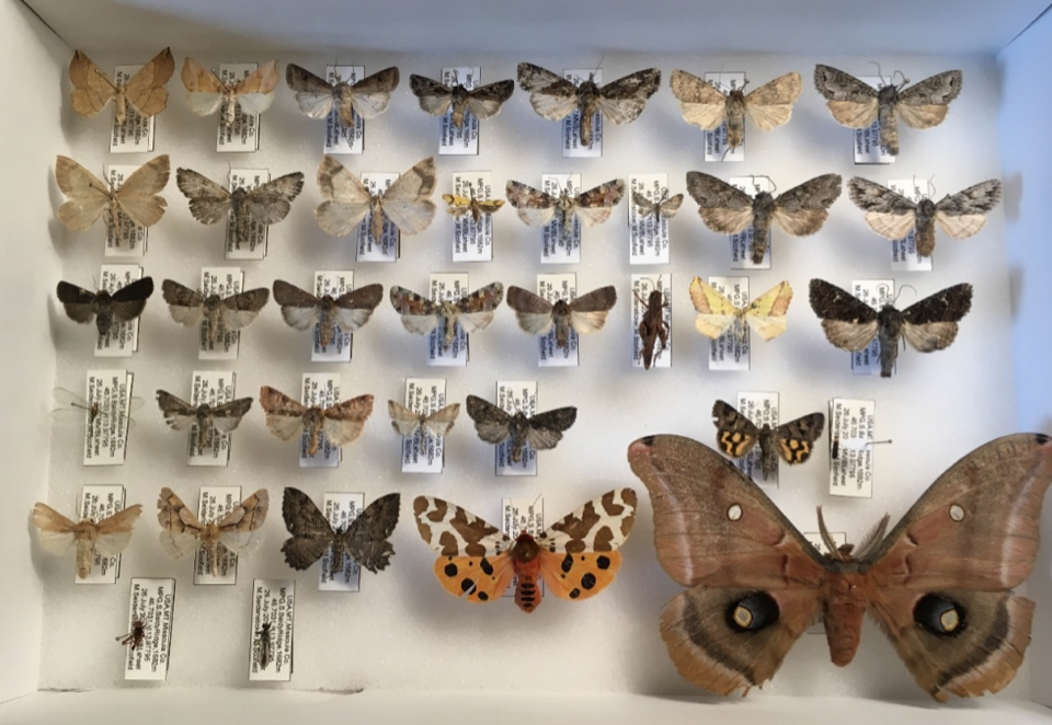 Some of the specimens collected from MPG Ranch.