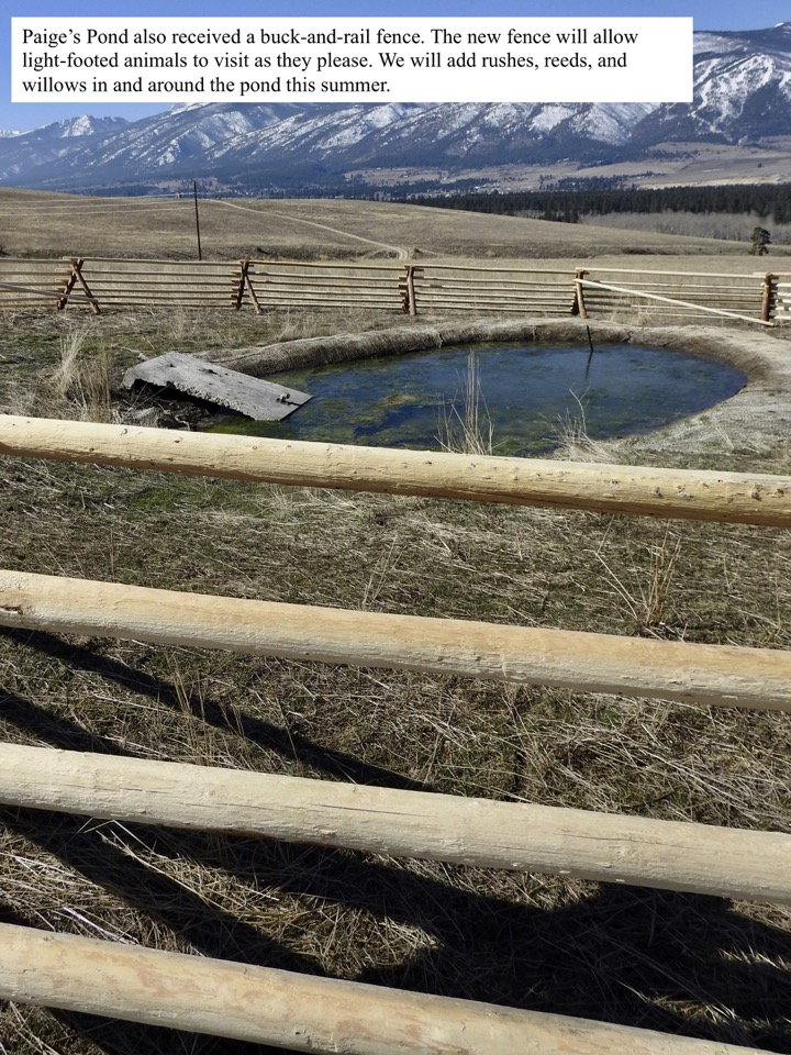 Paige's Pond also received a buck-and-rail fence.