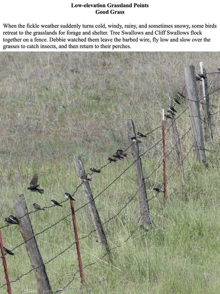 When the fickle weather suddenly turns cold, windy, rainy, and sometimes snowy, some birds retreat to the grasslands for forage and shelter.