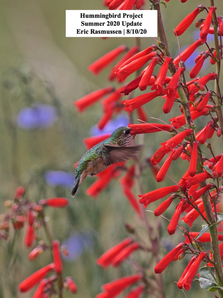 Hummingbird Project Summer 2020 Update Eric Rasmussen
