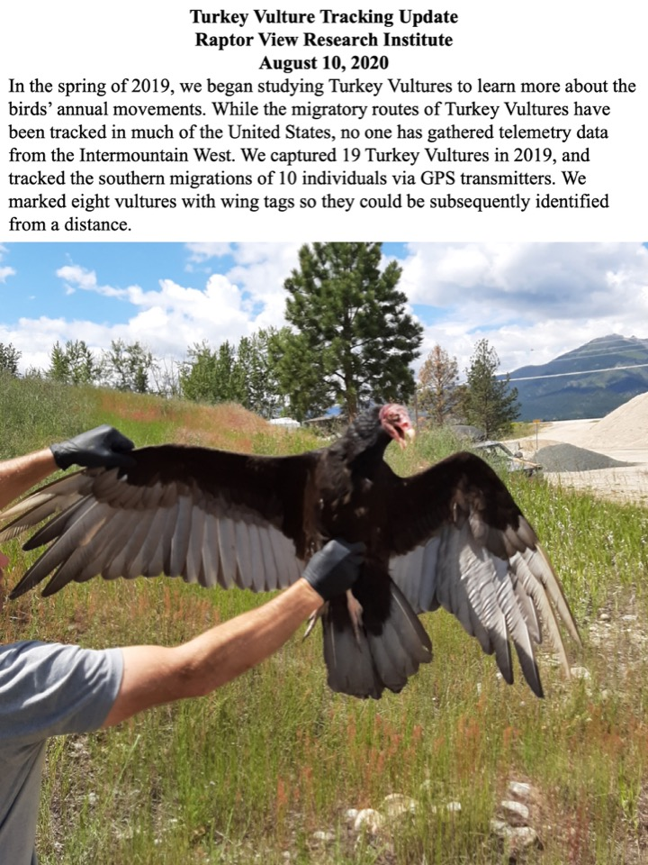 Although researchers have tracked Turkey Vultures migratory routes in much of the United States, no one has gathered telemetry data from the Intermountain West.