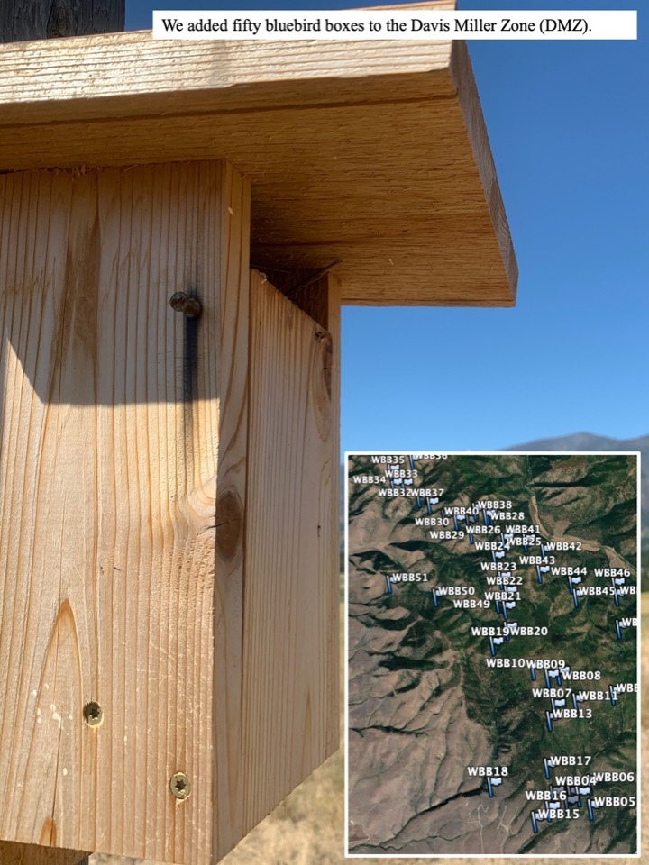 We added fifty bluebird boxes to the Davis Miller Zone