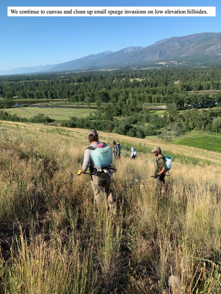 We continue to canvas and clean up small spurge invasions on low elevation hillsides.
