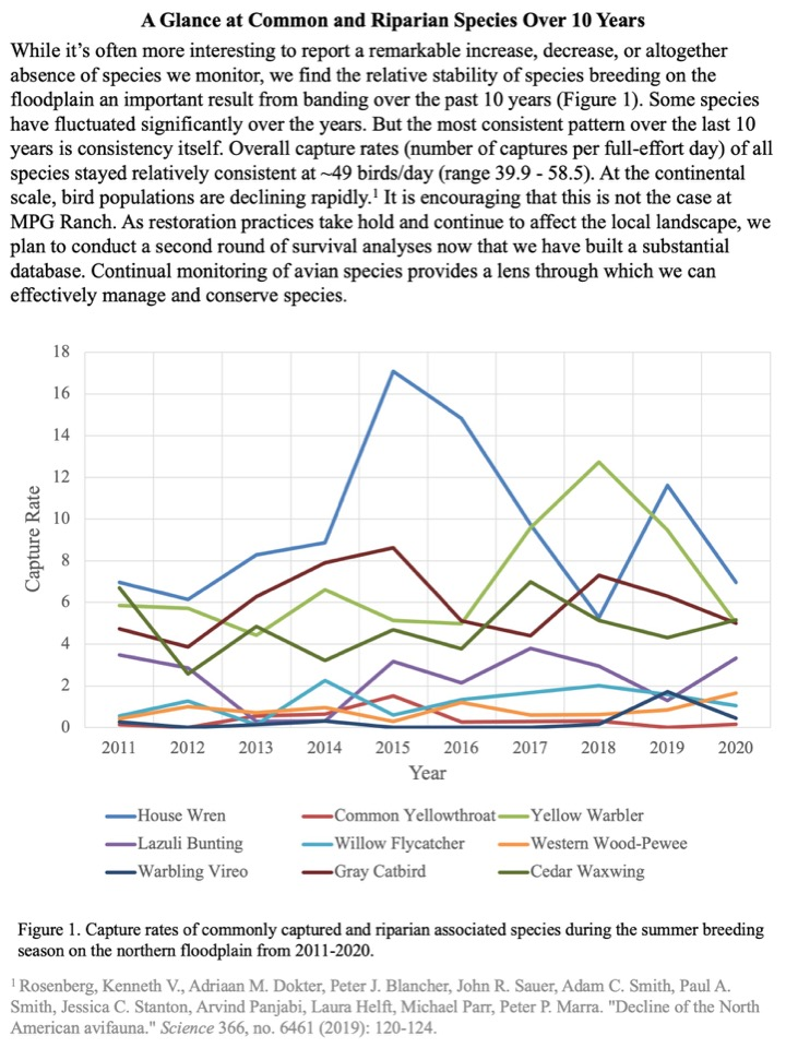 While it's often more interesting to report a remarkable increase, decrease, or altogether absence of species we monitor, we find the relative stability of species breeding on the floodplain an important result from banding over the past 10 years