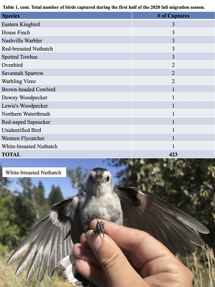 Total number of birds captured during the first half of the 2020 fall migration season cont.