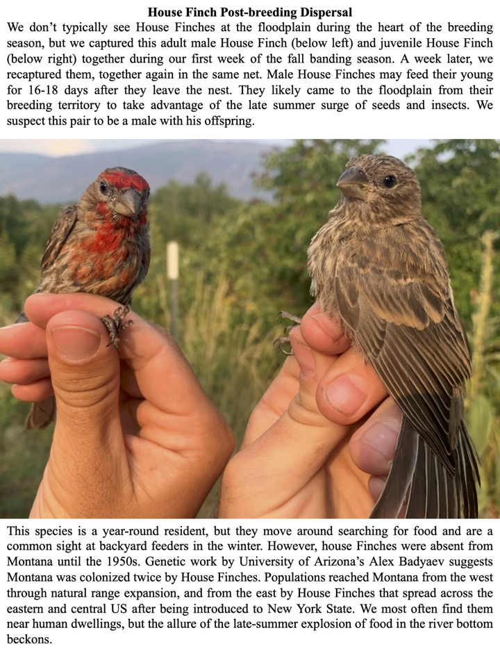 House Finch Post-breeding Dispersal