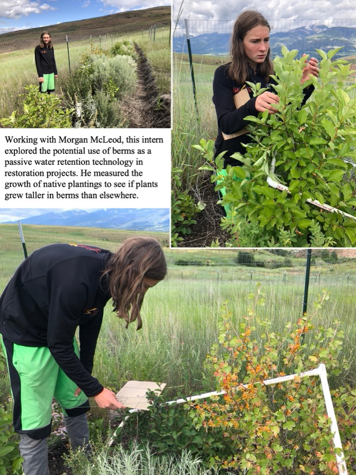 Working with Morgan McLeod, this intern explored the potential use of berms as a passive water retention technology in restoration projects.