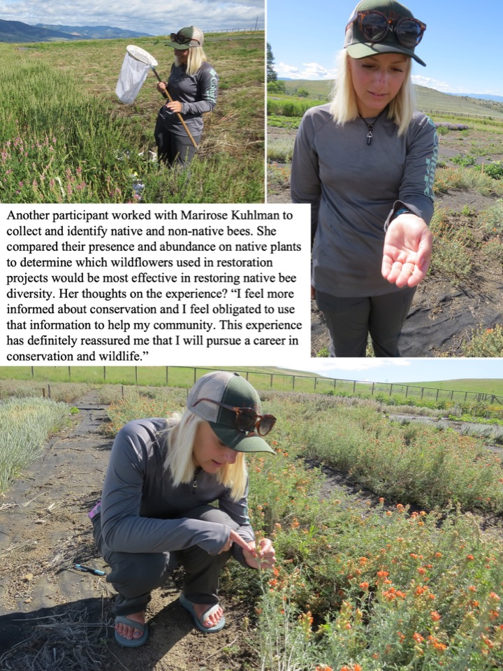 Another participant worked with Marirose Kuhlman to collect and identify native and non-native bees.