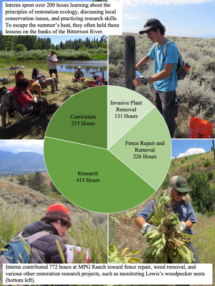 nterns contributed 772 hours at MPG Ranch toward fence repair, weed removal, and various other restoration research projects