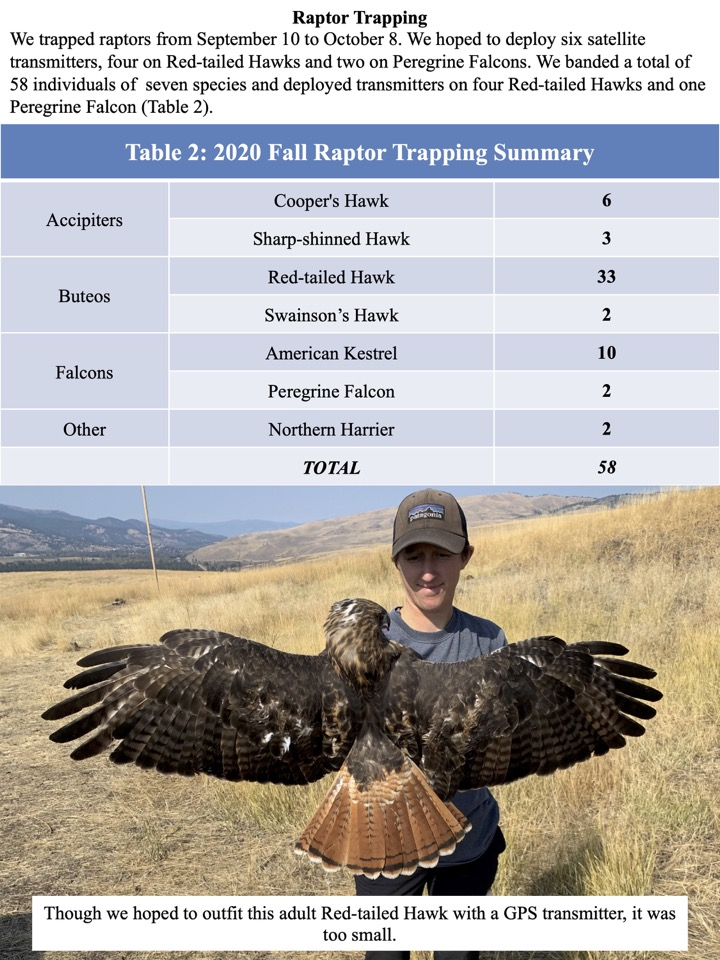 We banded a total of 58 individuals of seven species and deployed transmitters on four Red-tailed Hawks and one Peregrine Falcon