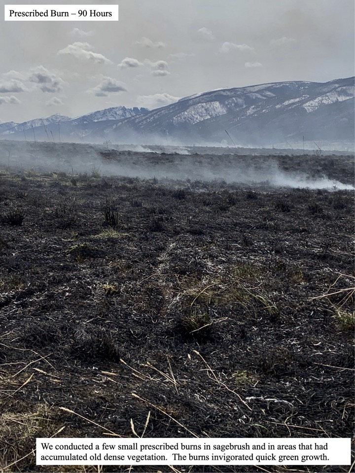 We conducted a few small prescribed burns in sagebrush and in areas that had accumulated old dense vegetation.