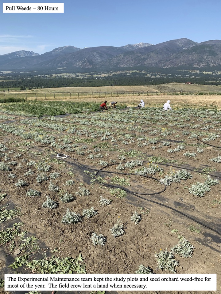 The Experimental Maintenance team kept the study plots and seed orchard weed-free for most of the year