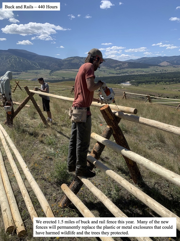 We erected 1.5 miles of buck and rail fence this year.