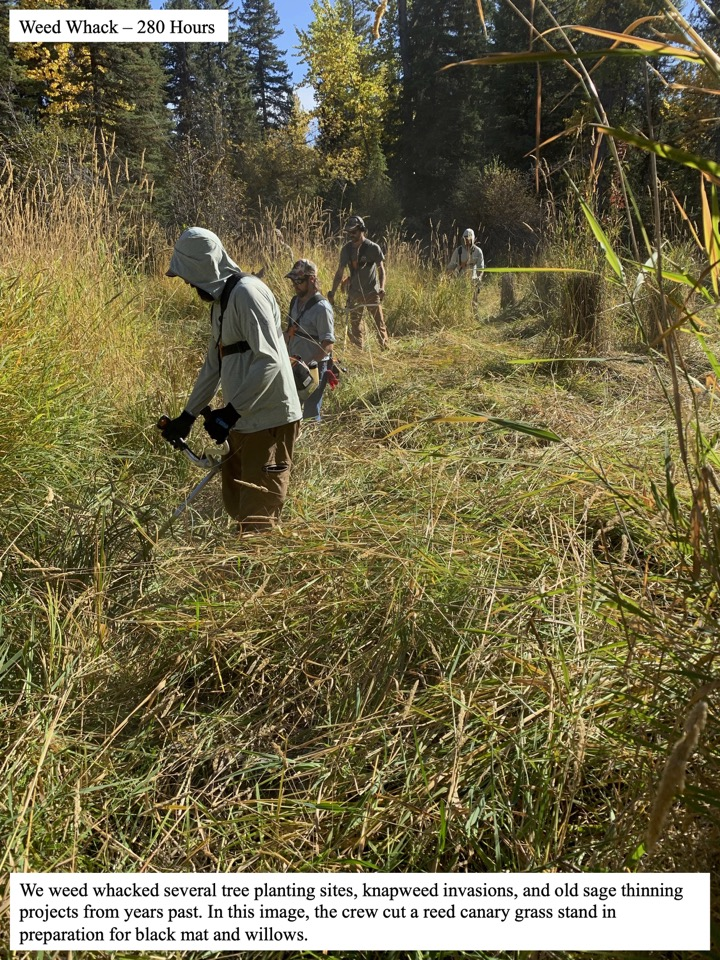 We weed whacked several tree planting sites, knapweed invasions, and old sage thinning projects from years past.