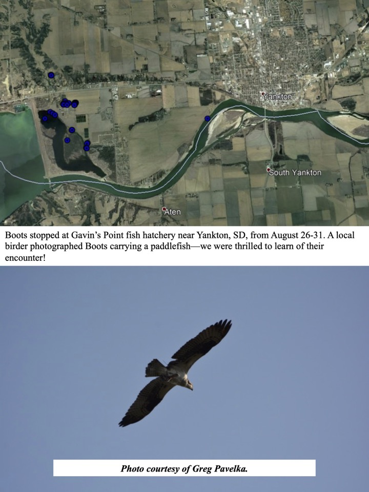 Boots stopped at Gavin's Point fish hatchery near Yankton, SD, from August 26-31.