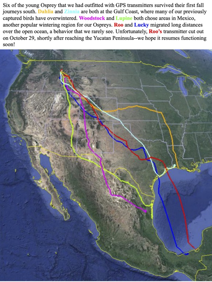 Six of the young Osprey that we had outfitted with GPS transmitters survived their first fall journeys south.