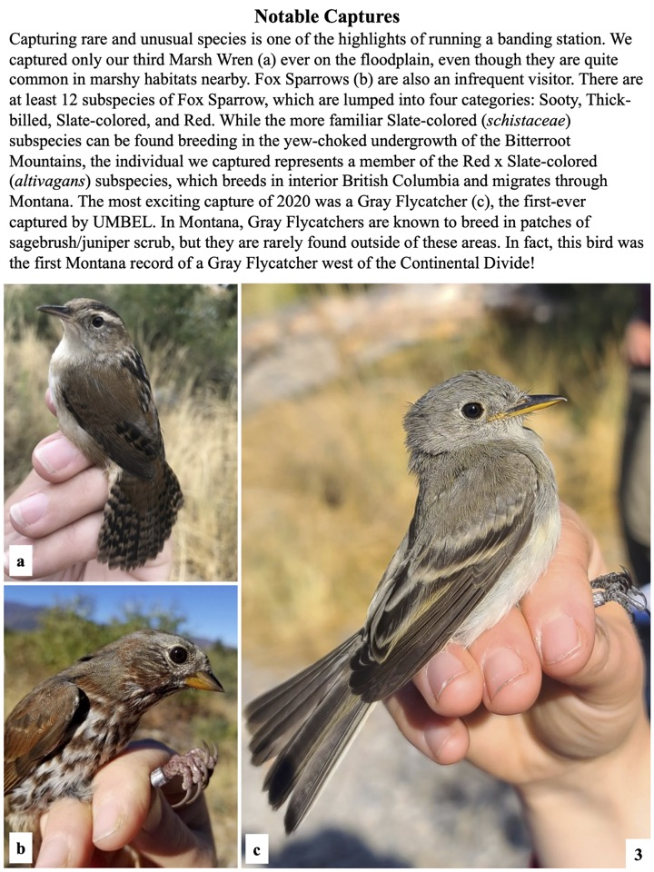 Capturing rare and unusual species is one of the highlights of running a banding station.