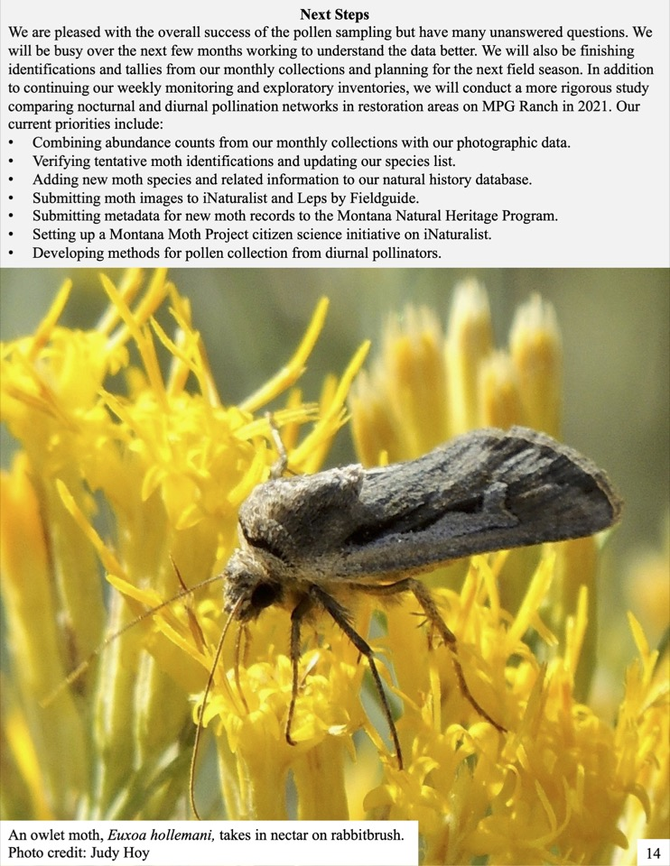 We detected pollen from many other plants like penstemon, paintbrush, balsamroot, and mock orange on numerous moth species.