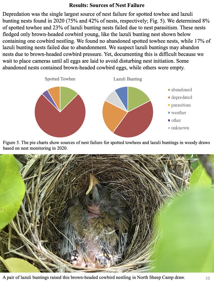 Depredation was the single largest source of nest failure for spotted towhee and lazuli bunting nests found in 2020.