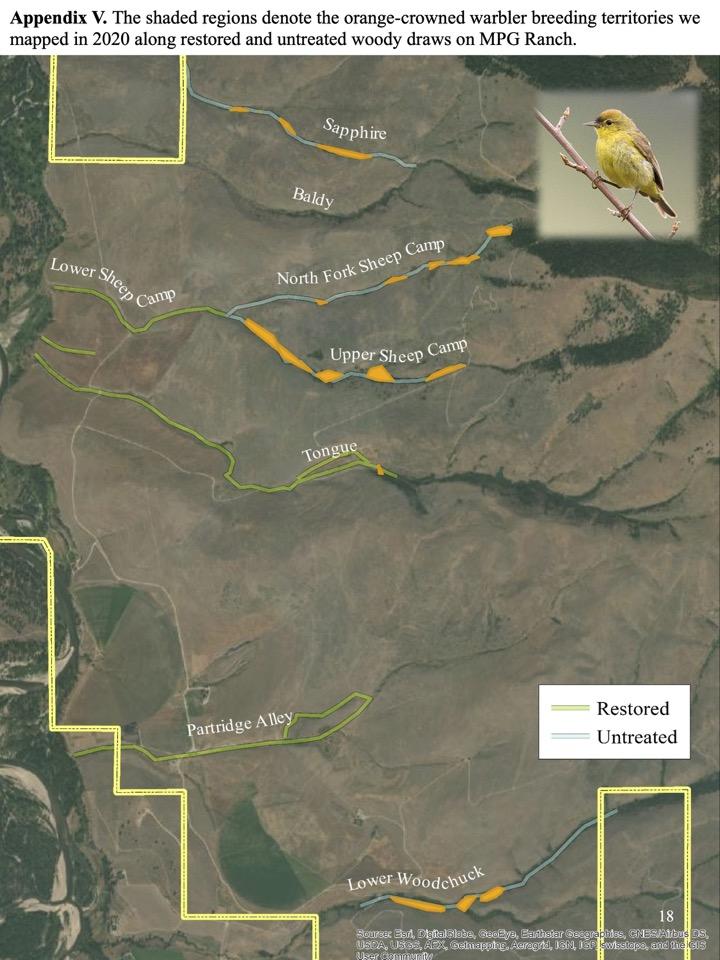 orange-crowned warbler breeding territories we mapped in 2020