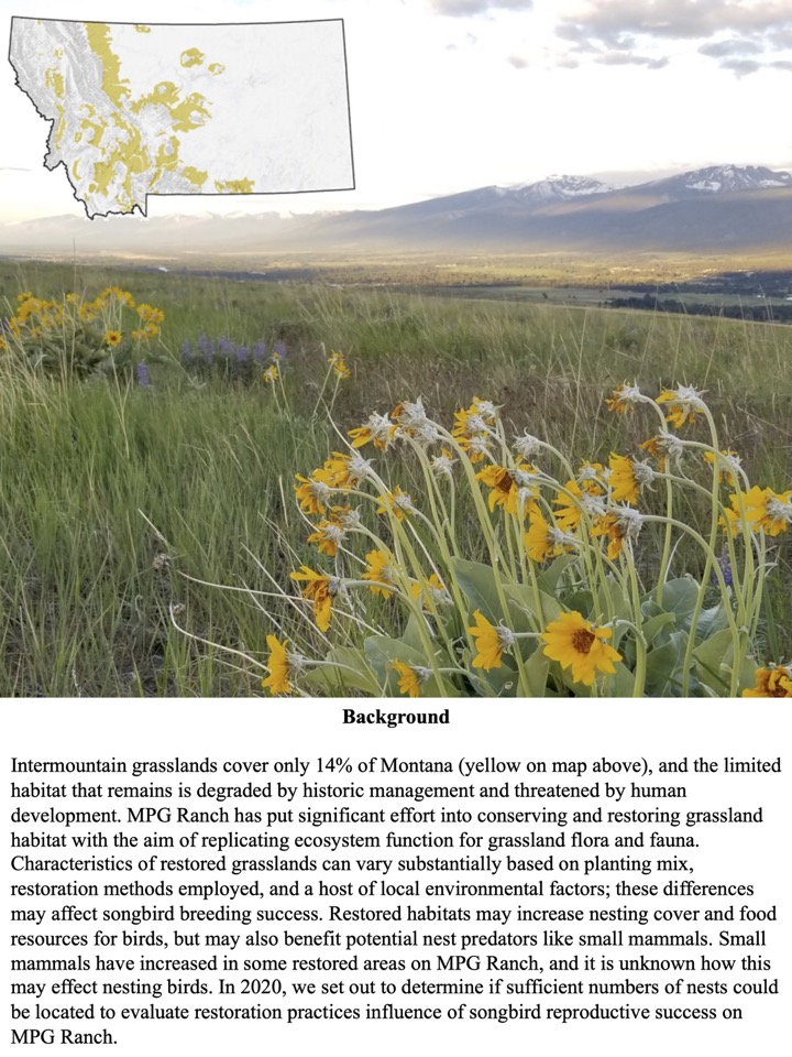Characteristics of restored grasslands can vary substantially based on planting mix, restoration methods employed, and a host of local environmental factors; these differences may affect songbird breeding success