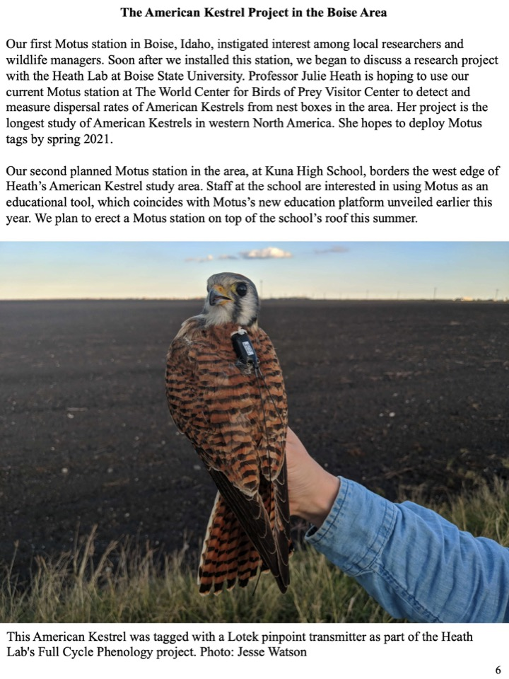 Professor Julie Heath is hoping to use our current Motus station at The World Center for Birds of Prey Visitor Center to detect and measure dispersal rates of American Kestrels from nest boxes in the area.