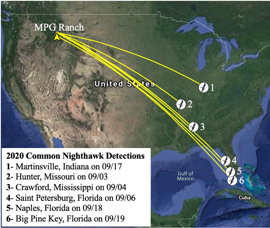 Early IWC Motus 2020 Fall Migration Common Nighthawk detections.