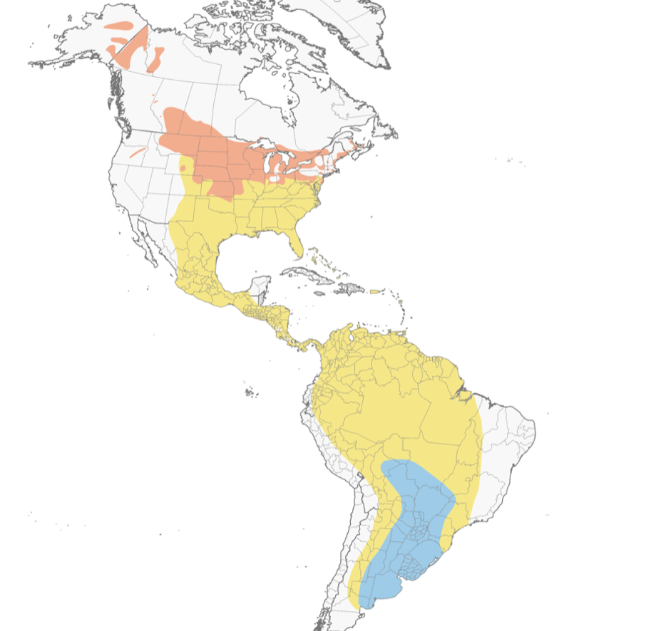 The range map shows the areas where Upland Sandpipers breed (orange), migrate (yellow), and overwinter (blue).