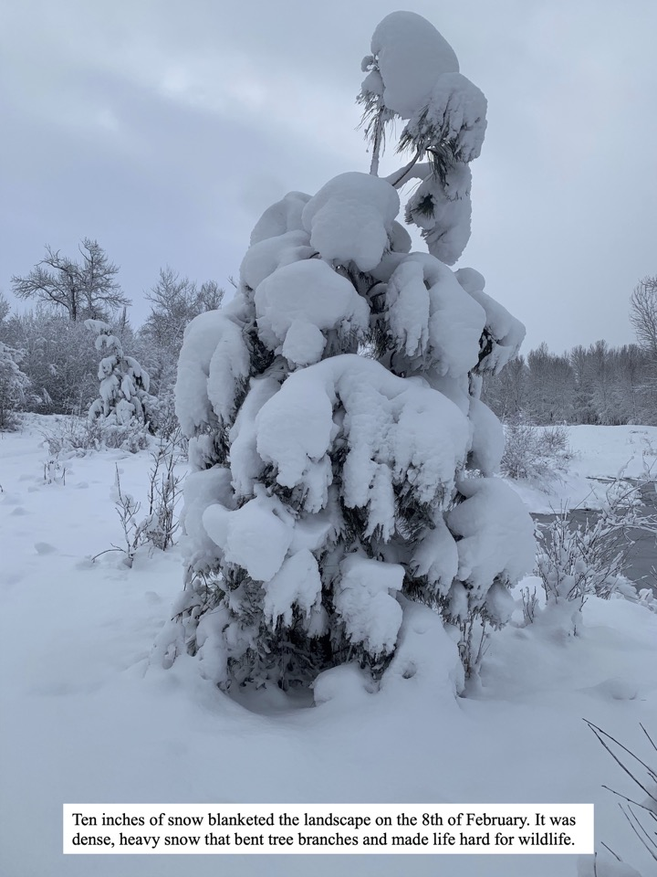 Ten inches of snow blanketed the landscape on the 8th of February.