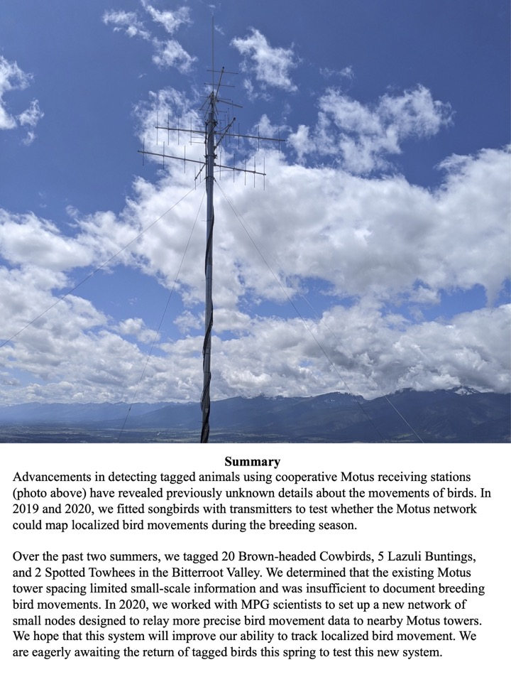 In 2020, we worked with MPG scientists to set up a new network of small nodes designed to relay more precise bird movement data to nearby Motus towers.