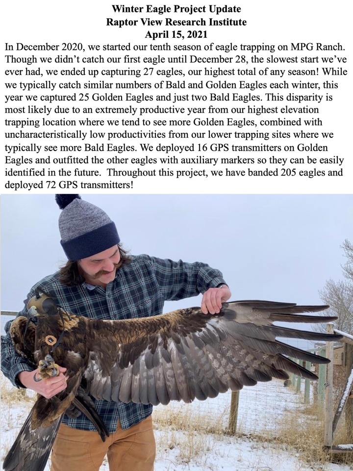 Though we didn't catch our first eagle until December 28, the slowest start we've ever had, we ended up capturing 27 eagles, our highest total of any season!
