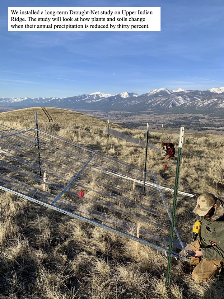 We installed a long-term Drought-Net study on Upper Indian Ridge.
