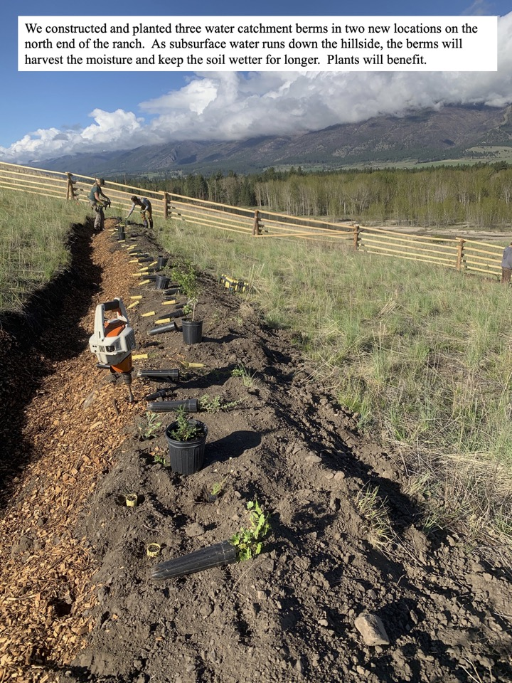 We constructed and planted three water catchment berms in two new locations on the north end of the ranch