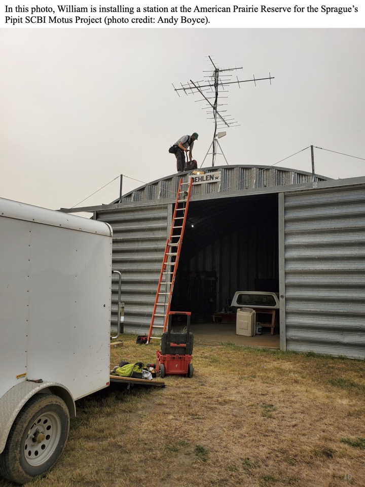 In this photo, William is installing a station at the American Prairie Reserve for the Sprague's Pipit SCBI Motus Project