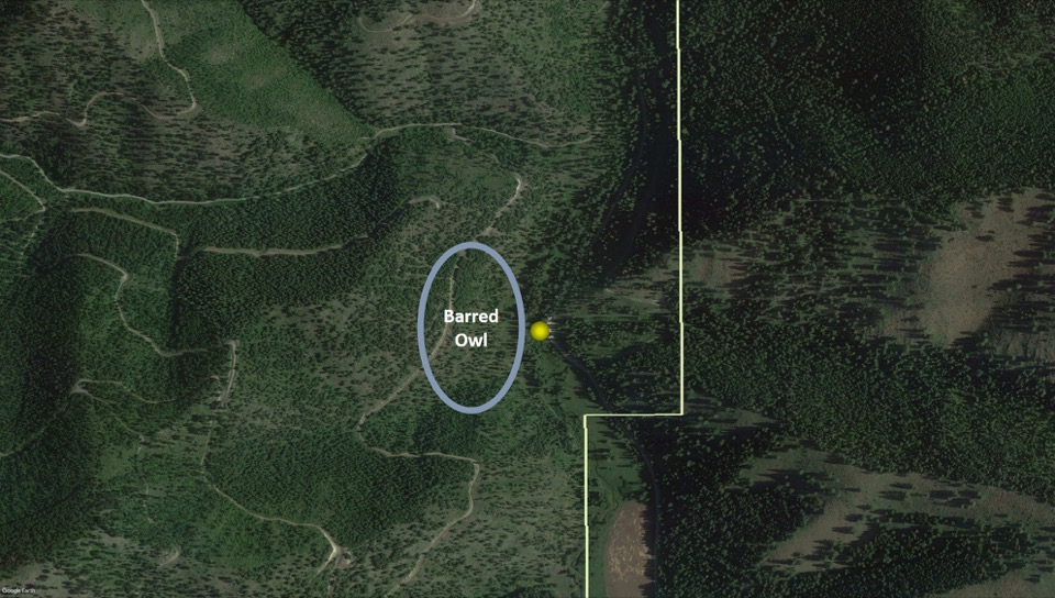 The yellow point indicates the light sheet location and the circle indicates where we heard the Barred Owl singing.