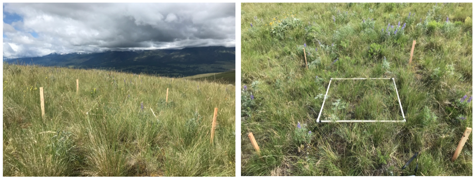 The study site in early summer 2020 when the plots were selected and surveyed for vegetation cover.